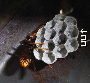Hc84201
