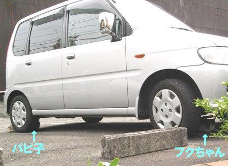 Pap86293a