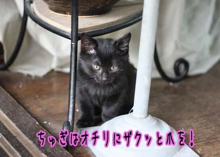 2009_04_16_4924a