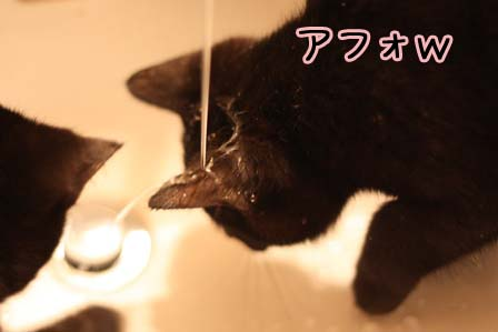 Mizu9618h