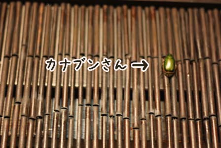 2009_07_31_8466